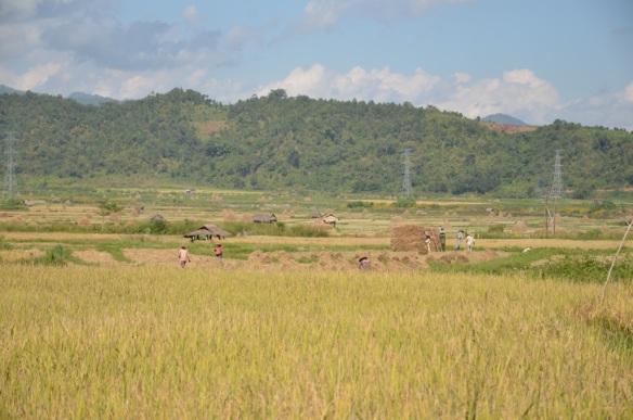 Les gens qui travaillent dans les champs de riz.