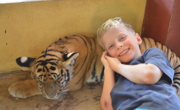 Théo fait une sieste sur son nouvel ami le tigre