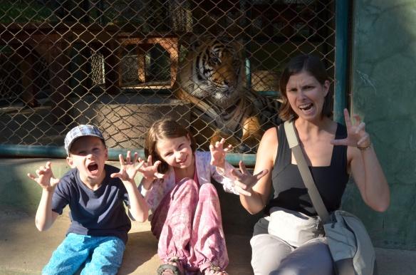 Les 3 tigres les plus dangereux!